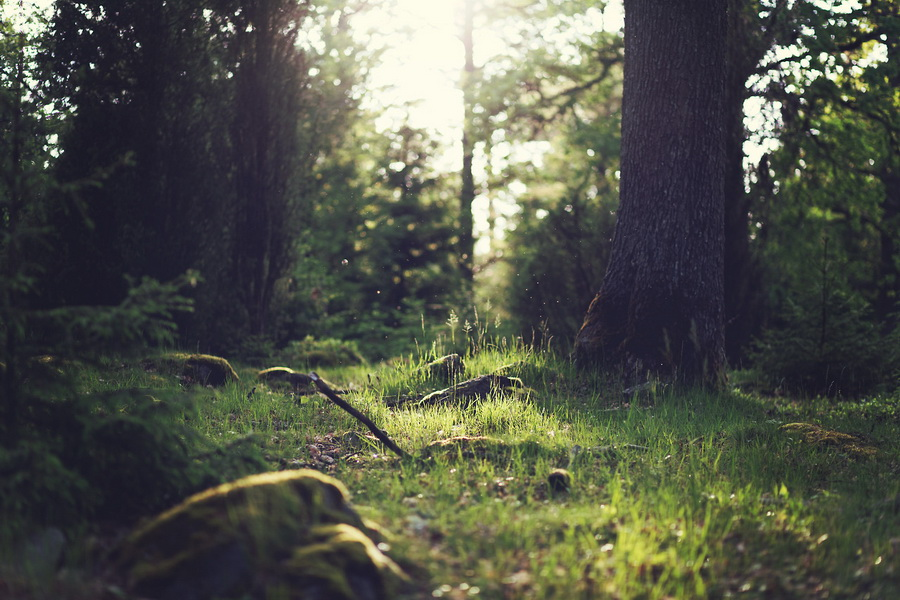 wood-nature-sunny-forest_1